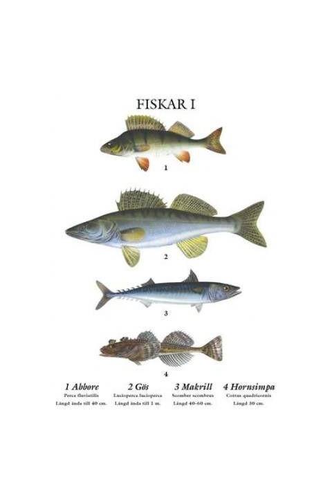 plansch fiskar